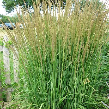 Bernardins landscaping grasses workwithnaturefo